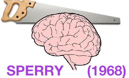 Sperry (1968) – Split-brain study | IB-notes